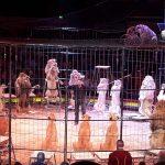 90 Flüchtlinge und 6 Helferinnen – schöner Ausflug in den Zirkus Krone